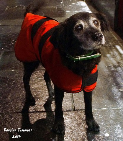 Meet Casablanca 17 years old and still romping in Glasgow..