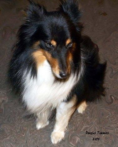 So Lassie is coy.. Glasgow
