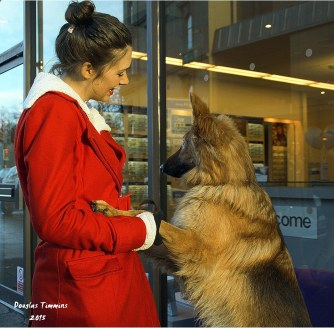 The lovely Rebecca with Ella the German Shepherd (18 months) Today Glasgow